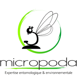 Micropoda logo: entomological and environmental expertise, Reunion, insect